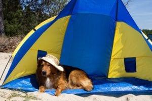 Sonnenschutz am Strand - Hund in Strandmuschel